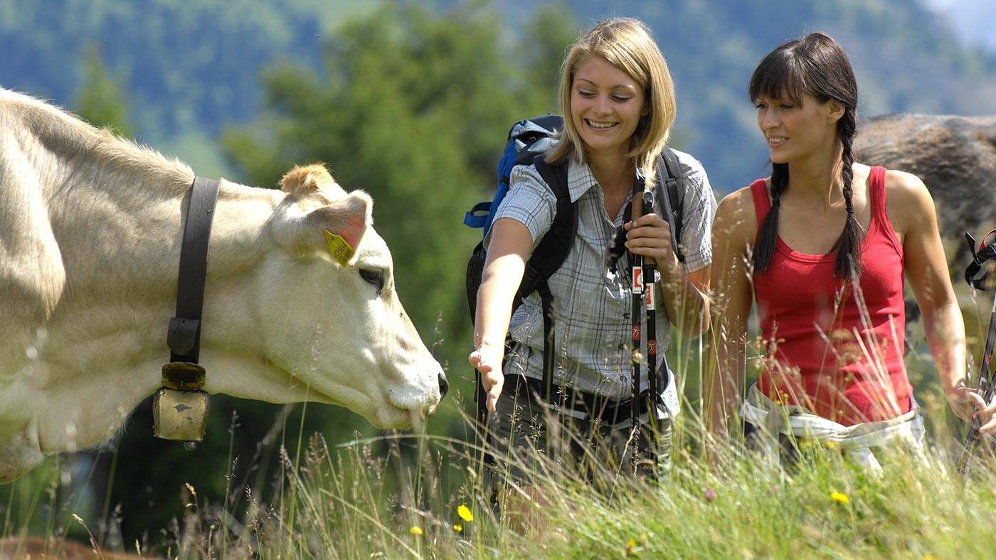 Two girls and a cow during a trekking